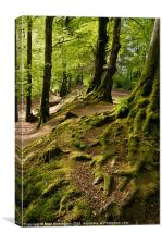 Woodbury Castle woods, Canvas Print