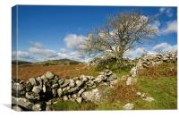 Dartmoor scene, Canvas Print