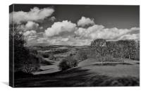 Killerton parkland, Canvas Print