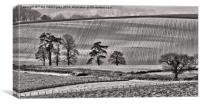 Fields and trees, Canvas Print