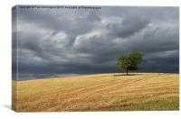 Stormy clouds and lone tree, Canvas Print