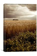 Moody Barley Field with Stormy Sky at Harvest Time, Canvas Print
