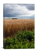 Dramatic Barley Field with Stormy Sky at Harvest T, Canvas Print