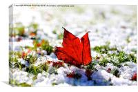 Last Autumn Leaf Standing in First Snow of Winter, Canvas Print