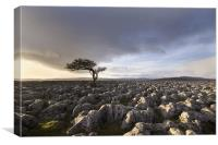 Wharfedale Isolation, Canvas Print