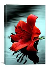 Lilly, Canvas Print