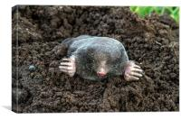 I Am A Mole, And I Live In A Hole!, Canvas Print