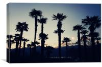 Palm Trees, Canvas Print