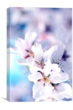 Spring Blossom II, Canvas Print