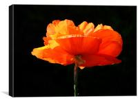 Single Poppy, Canvas Print