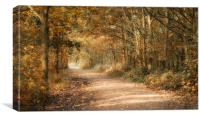 Just another Path, Canvas Print