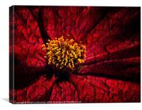 Deep Red., Canvas Print