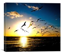 Wings on the Wind, Canvas Print