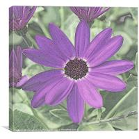Senetti Deep Blue, Canvas Print