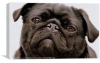 Black Pug Dog, Canvas Print
