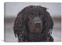 Irish water spaniel, Canvas Print