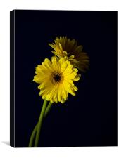Simply Yellow 2, Canvas Print