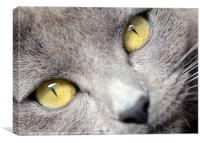Look into my Eyes . . ., Canvas Print