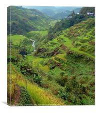 Banaue Rice Terraces, Canvas Print