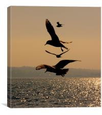 Dancing Gulls, Canvas Print