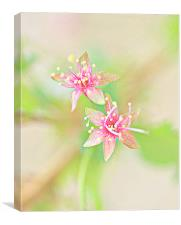 Abstract Cherry Blossom HDR, Canvas Print