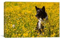 Dog in flowers, Canvas Print