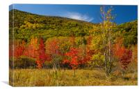 Fall colors Maine, Canvas Print