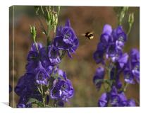 Bluebells and Bees, Canvas Print