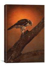 BIRD OF PREY, Canvas Print