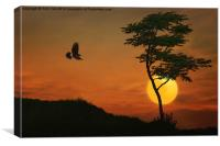 A Hawk In The Sunset, Canvas Print