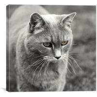 Whiskers, Canvas Print