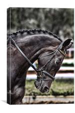 Dressage Mare, Canvas Print