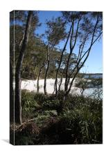 Jervis Bay Cove, Canvas Print