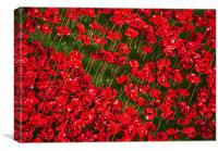 Different Angle of Poppies, Canvas Print