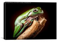 White's Tree Frog, Canvas Print