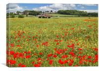 Earsdon Poppies, Canvas Print