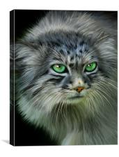 Pallas Cat, Canvas Print