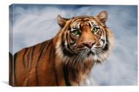 Sumatran Tiger on Blue, Canvas Print