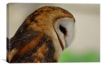 Profile of a Barn Owl, Canvas Print