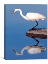 Egret For Mike, Canvas Print