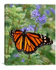 Open-Winged Monarch, Canvas Print