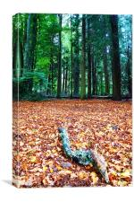 Gifford Woods, Canvas Print