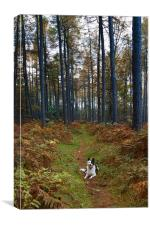 Dog in Woods, Canvas Print