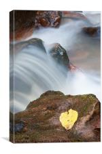 Leaf to Water, Canvas Print