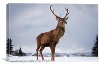 Highland Deer, Canvas Print
