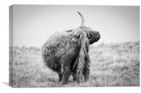 Highland Cow Scratching, Canvas Print