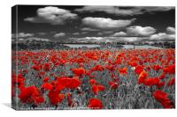 Crimson Poppies, Canvas Print
