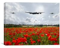 Poppy Flypast, Canvas Print