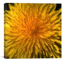 Just Dandy, Canvas Print
