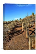 Sunset Crater Path, Canvas Print